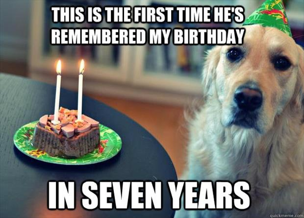 funny pictures dog years