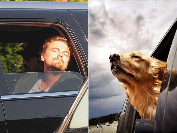 funny pictures dogs hang their heads out the window