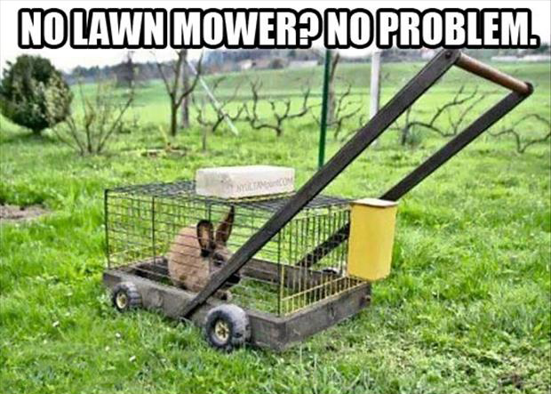funny pictures how to mow your lawn