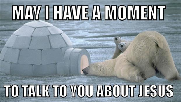 funny pictures polar bears