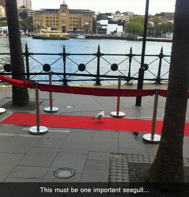funny pictures seagull