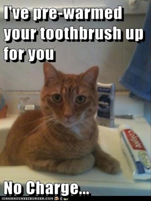 funny pictures toothbrushes and cats