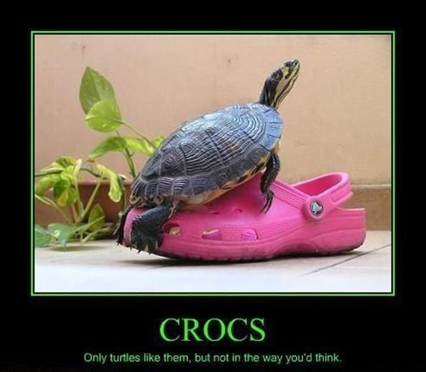 funny pictures turtles and croc shoes