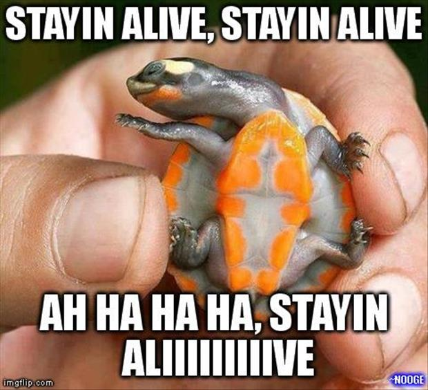 funny turtles