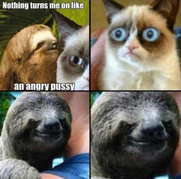 grumpy cat is an angry pussy