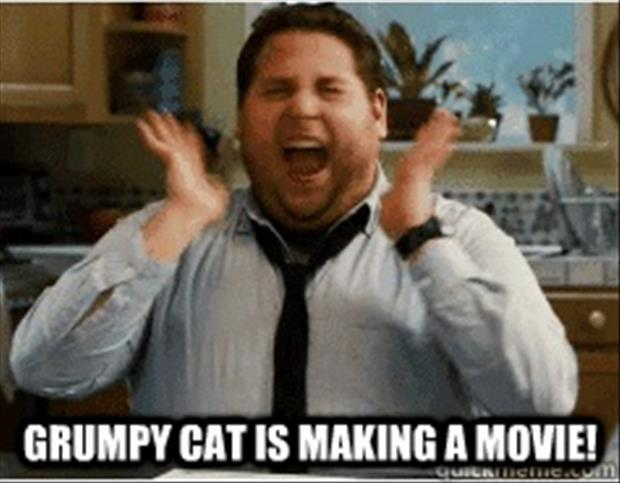 grumpy cat is making a movie