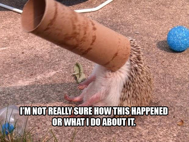 hedgehog doesn't even know what he's doing