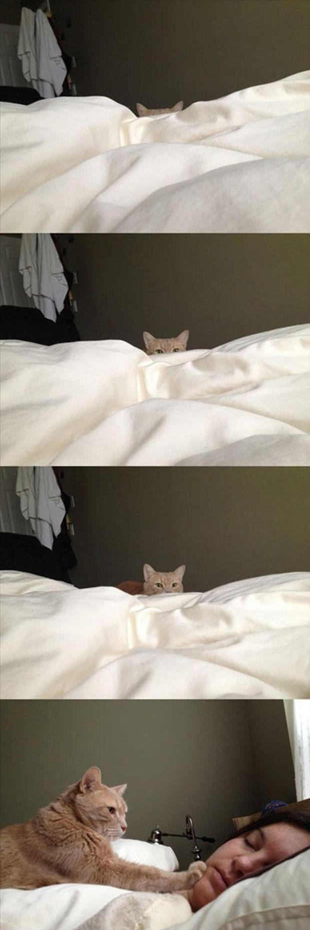 how cats wake you up