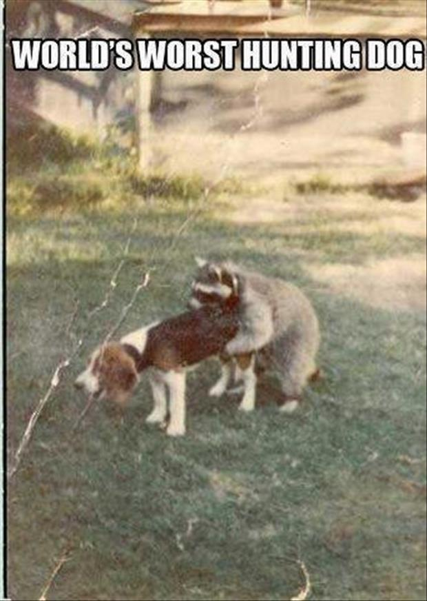 hunting dogs funny pictures