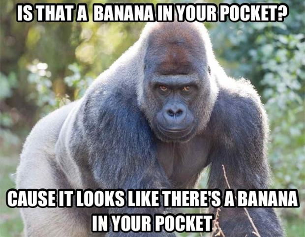 is that a banana in your pocket