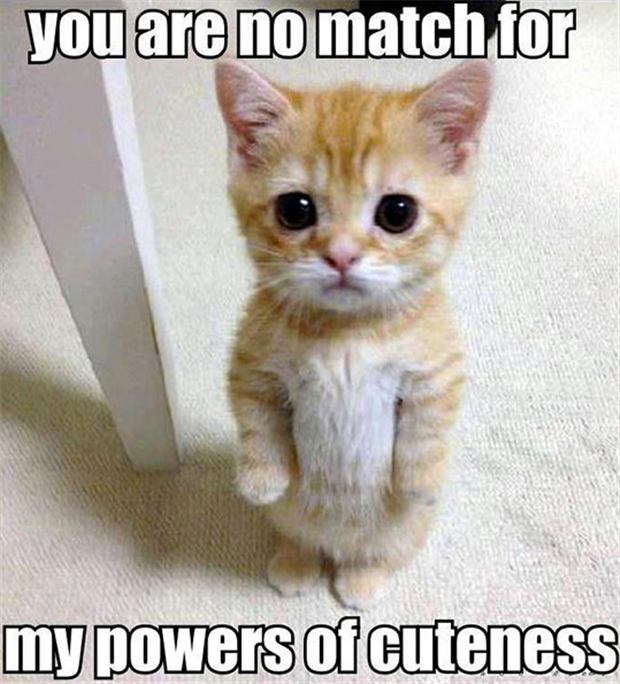 kitty has cuteness powers