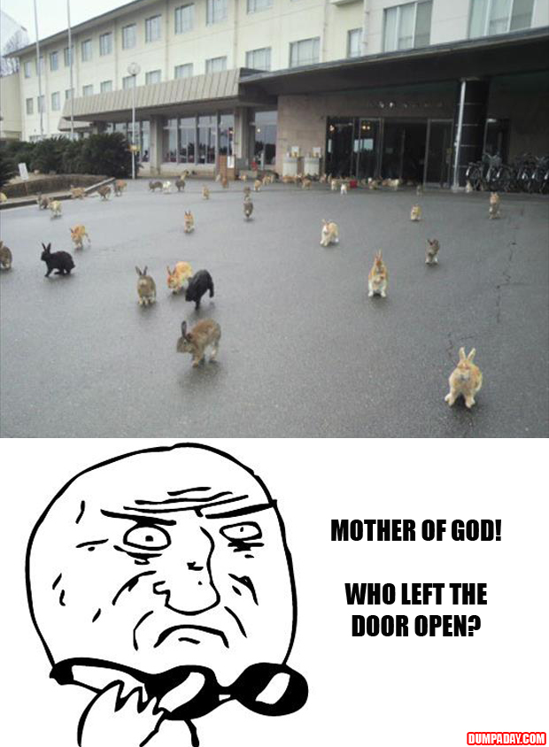 mother of god, rabbits escape