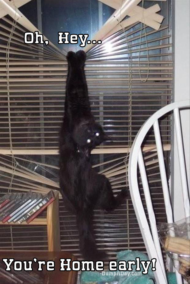 oh hey you're home early cat hangs from window blinds