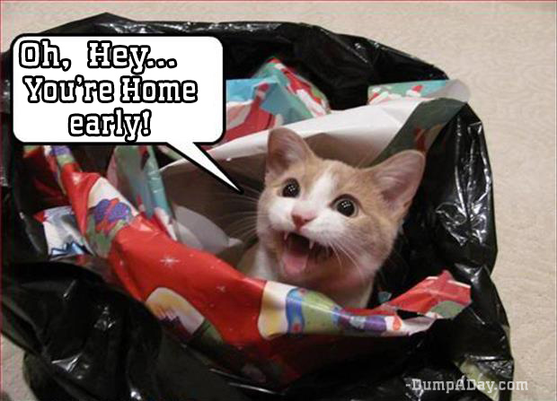 oh hey you're home early cat in garbage