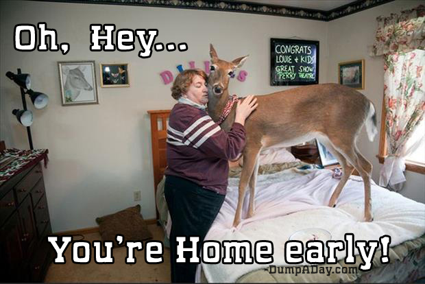 oh hey you're home early deer