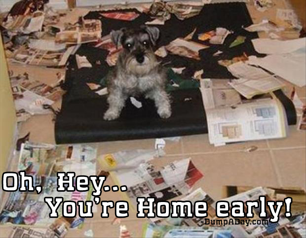 oh hey you're home early dog made a mess