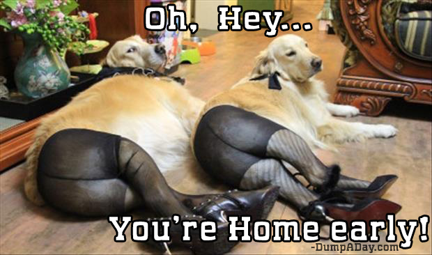 oh hey you're home early dogs in panty hose
