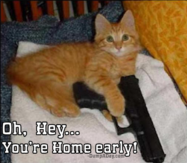 oh hey you're home early gun and cat