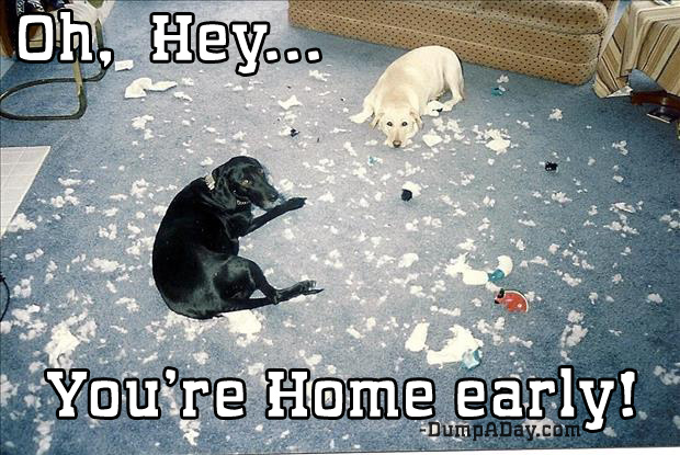oh hey you're home early made a mess