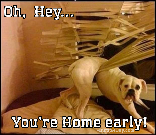 oh hey you're home early window blinds