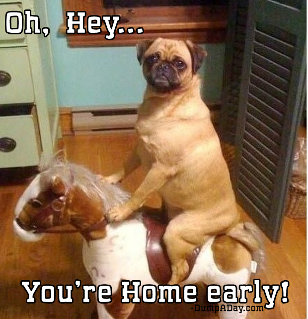 oh hey you're home pug on rocking horse