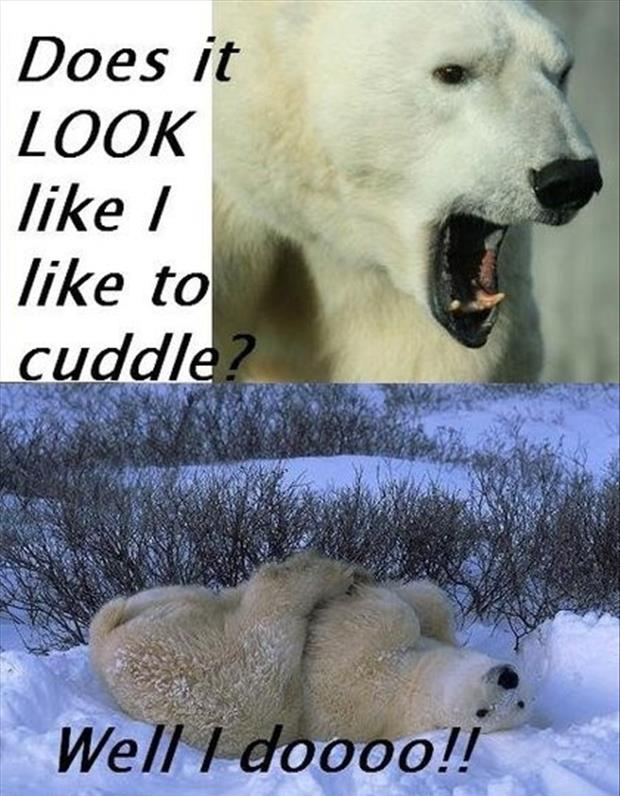 polar bear loves to cuddle