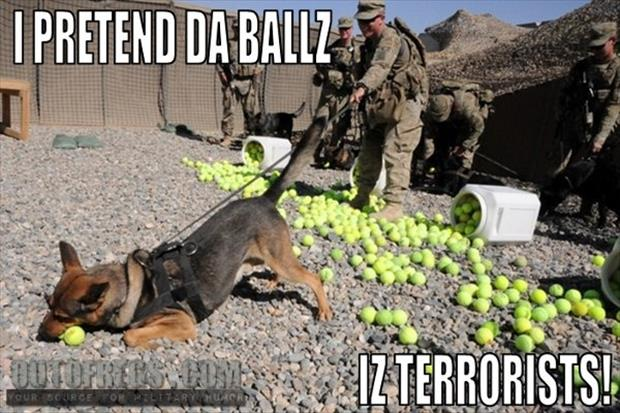 police dogs funny pictures