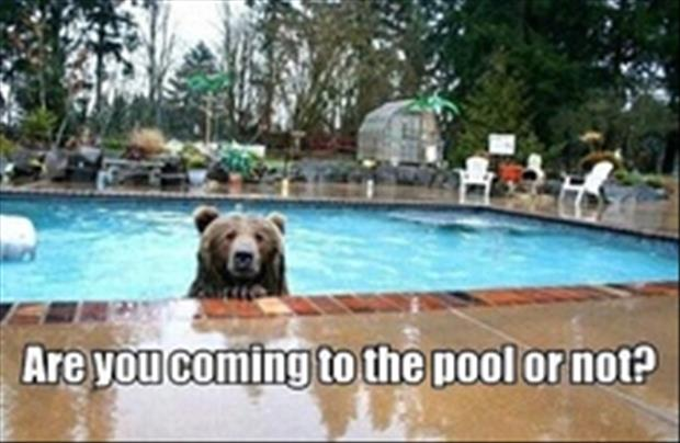 pool funny pictures