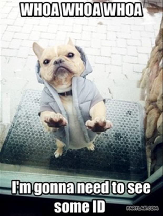 security dog funny pictures
