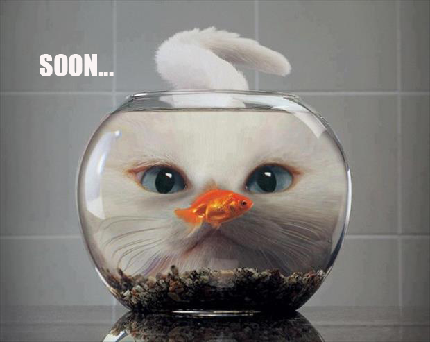soon meme cat