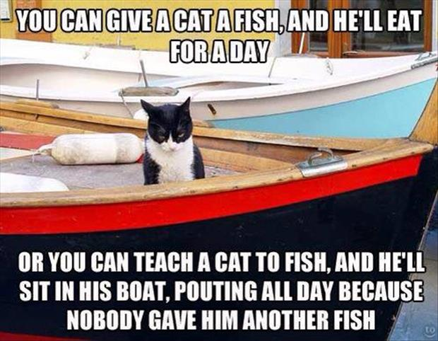 teach a cat to fish