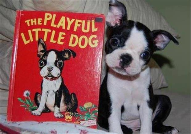 the playful little puppy