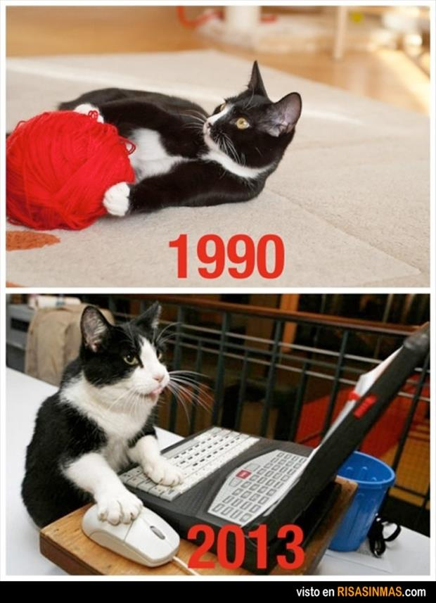 then and now cats