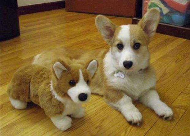twin dogs