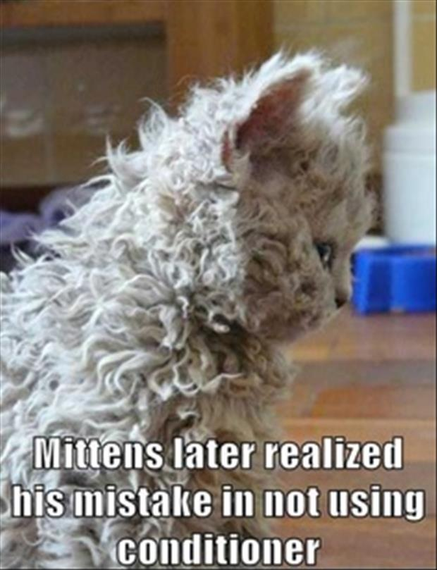 use conditioner on cat hair