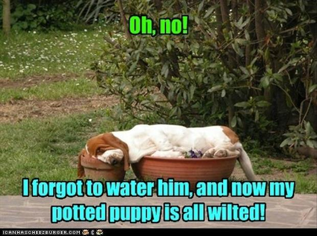 water your puppy plants