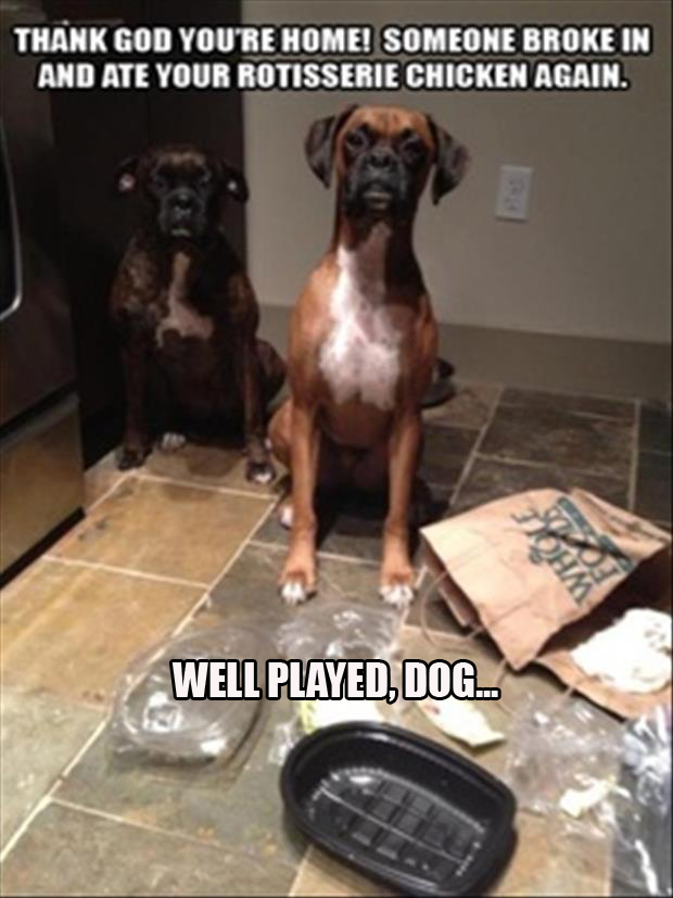 well played dogs