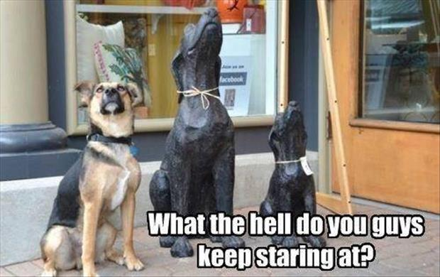what the hell are you guys staring at funny dogs