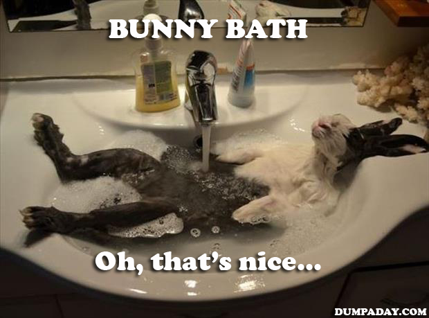 Rabbit taking a bath