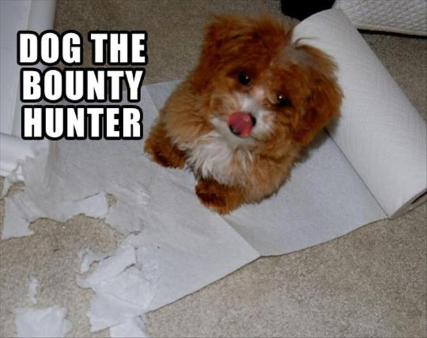 a dog the bounty hunter dump a day