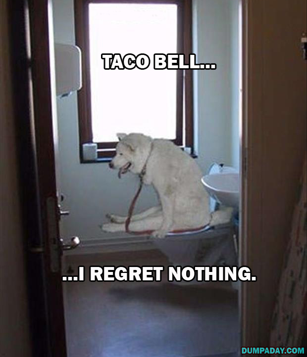 a dogs regret nothing (13)