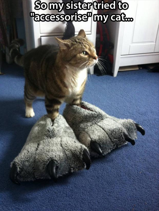 a funny cat slippers