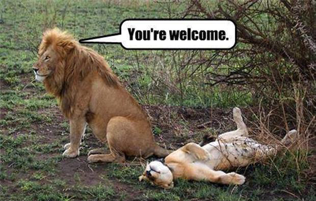 a lion sex you're welcome