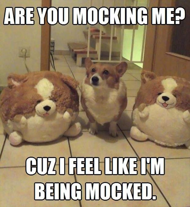 are you mocking me funny animal pictures