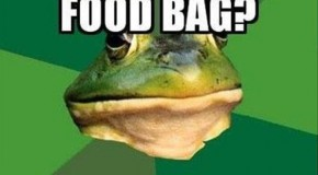 The Best Of Bachelor Frog Meme – 28 Pics