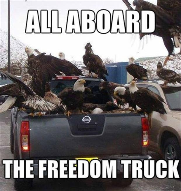 bald eagles freedom funny pictures