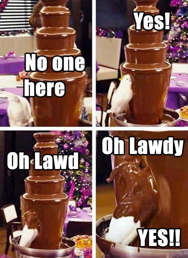 bird in chocolate fountain