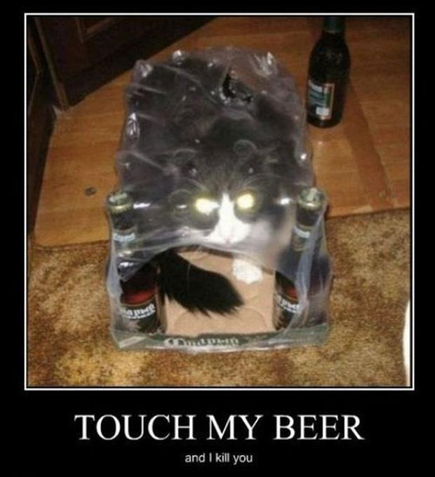 cat loves beer