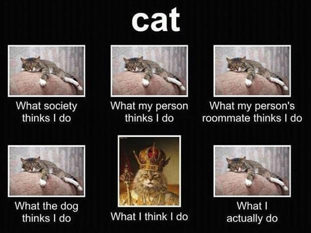 cat viewed by people