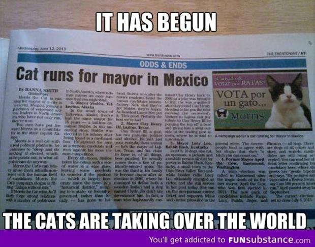 cats take over the world